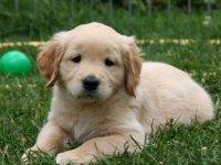 Fransa'daki bir kasabada köpeklerin 'fazla havlaması' yasaklandı