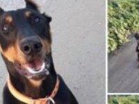 Kaybettiği köpeğini bulana 500 TL verecek