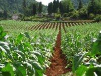 KKTC'den tarım ilacı ve tütün