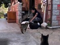 10'u felçli, 12'si kör 75 kedi ile yaşıyor