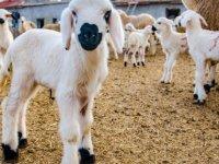Hayvan Üreticilerine yönelik eğitim programı