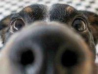 Köpekler kötü insanları fark ediyor