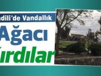 Vadili'de vandallık.. Ağacı kırdılar...