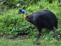 ABD'de bir adam beslediği dev kuş tarafından öldürüldü