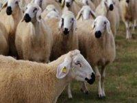 Tarim ve Doğal Kaynaklar Bakanlığı'ndan kasaplık hayvan satışı duyurusu
