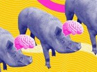 Yeni bir araştırma: Kalp dursa bile beyin canlılığa devam eder mi?