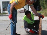 LTB, Başkent Lefkoşa'da biyolojik ilaçlamalara devam ediyor