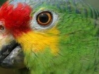 Uyuşturucu satıcılarıyla iş birliği yapan papağanı 'gözaltına' alındı