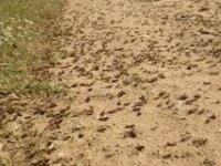 İlaçlanan bölgede hayvan otlatma ve hasat artık güvenli