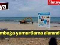 Kaplumbağa yumurtlama alanı olan Vasilya'da kazı yapılıyor (video)