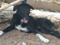 Tayland: Köpek annesi tarafından canlı canlı gömülen bebeği kurtardı
