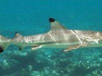 KKTC sahillerinde köpekbalığı görüntülendi (Foto-Haber)
