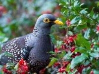 Kuşlar düşkünü çıktı: Kuşlar lüks mekanlarda yaşamayı tercih ediyor