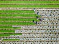 2050'de 10 milyar insanı beslemenin 5 yolu