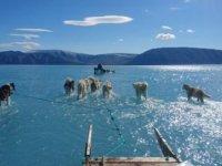 Grondland'da her yıl kar üstünde kızak çeken köpekler bu yıl sularla  mücadele ediyor