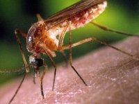 Sivrisinekler Neden Var, Ne İşe Yarar? Yok Etsek Olmaz Mı?