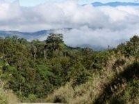 Papua Yeni Gine'de kabile katliamı: Onlarca kadın ve çocuk öldürüldü