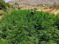 Diyarbakır Valiliği: 1,3 milyon kök kenevir bitkisi ele geçirildi