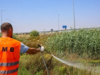 """Mağusa Belediyesi """"Batı Nil Virüsü""""ne karşı çalışmalarını yoğunlaştırdığını açıkladı"""