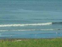 Balina taklidi yapan bozayı kameralara yansıdı (Video)