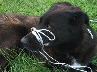 Köpeğin ayağını ve ağzını bağlayıp, ölüme terk ettiler
