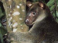 Ormanlardaki hayvan popülasyonunda yarı yarıya azalma