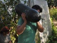 Bahçesine ektiği hıyarlar 1 metreyi geçince paniğe kapıldı