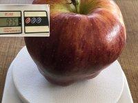935 gramlık elma görenleri şaşırtıyor