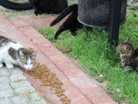 'Sitenin bahçesinde bulunan kedileri, mamalarına kimyasal madde dökerek zehirlemeye çalıştı'