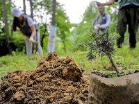 11 milyon fidan kampanyasına ormancılardan tepki: 8-9 milyonu zayi olacak