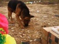 Ölen sahibini özleyen köpek, toprağı kazarak sahibine ulaşmaya çalıştı: Mezardan ayrılmayı reddediyor