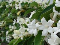 Gül, Yasemin ve Meyve ağaçları Ev Bahçelerinde En Fazla Tercih Edilen Bitki Türleri…