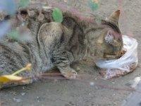 'Askıda mama' uygulamasıyla sokak hayvanlarını besliyor