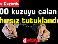 100 kuzuyu çalan  3 hırsız tutuklandı