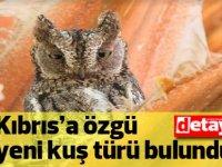 Yeni kuşumuzla tanışın: Kıbrıs İshakkuşu!