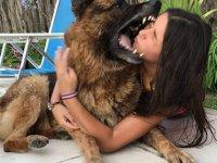 Fotoğraf çekilmek isteyen kızın yüzünü köpek ısırdı