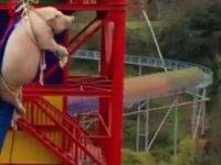 Domuza bungee jumping yaptıran eğlence parkı özür diledi