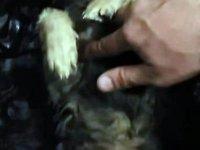 Soğuktan donmak üzere olan köpeği, kalp masajıyla kurtardılar