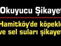 Hamitköy'de köpekler ve sel suları şikayeti