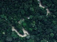 Ormanda 34 gün meyve yiyerek hayatta kalan anne ve çocukları bulundu
