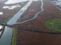 Kanal İstanbul için 458 hektarlık ormanlık alan yok olacak