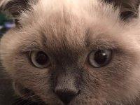 Kediler sizi gözleriyle öpüyor
