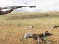 Av Köpeği Hırsızlığı