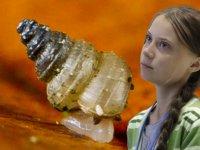 Bilim insanları bir salyangoz türüne Greta Thunberg'in adını verdi