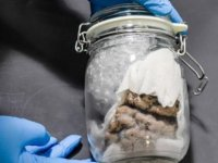 ABD-Kanada sınırında, bir kargo aracından kavanoz içinde insan beyni çıktı