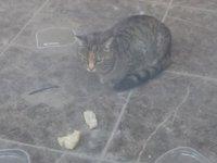 İş yerinde mahsur kalan kedi, 20 gündür kapı altından atılan yiyeceklerle besleniyor