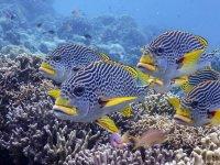 Okyanuslardaki azalan oksijen su altı yaşamını tehdit ediyor