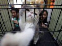 Shenzhen'de kedi ve köpek eti yemek yasaklandı