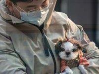 Çin'den 'çığır açan' adım: Besi hayvanlarıyla evcil hayvanlar tekrar sınıflandırıldı, köpek eti tüketimine yasak sinyali