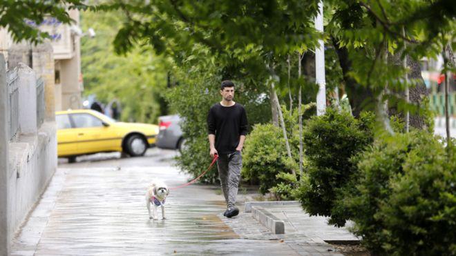Tahranda köpek gezdirmek artık yasak 47